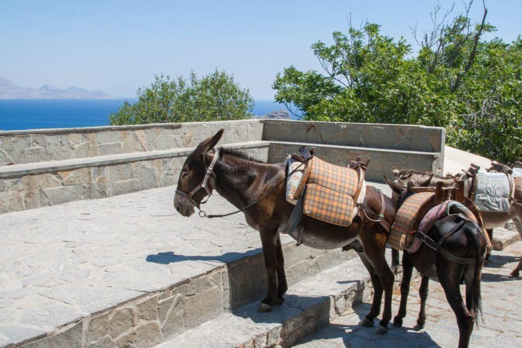 Saddle donkeys waiting for there turn to carry tourists back down to the village.