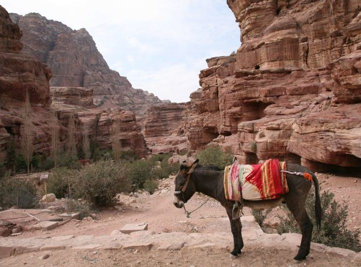 A lone donkey awaits a rider in Petra.