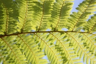 I loved the ferns!