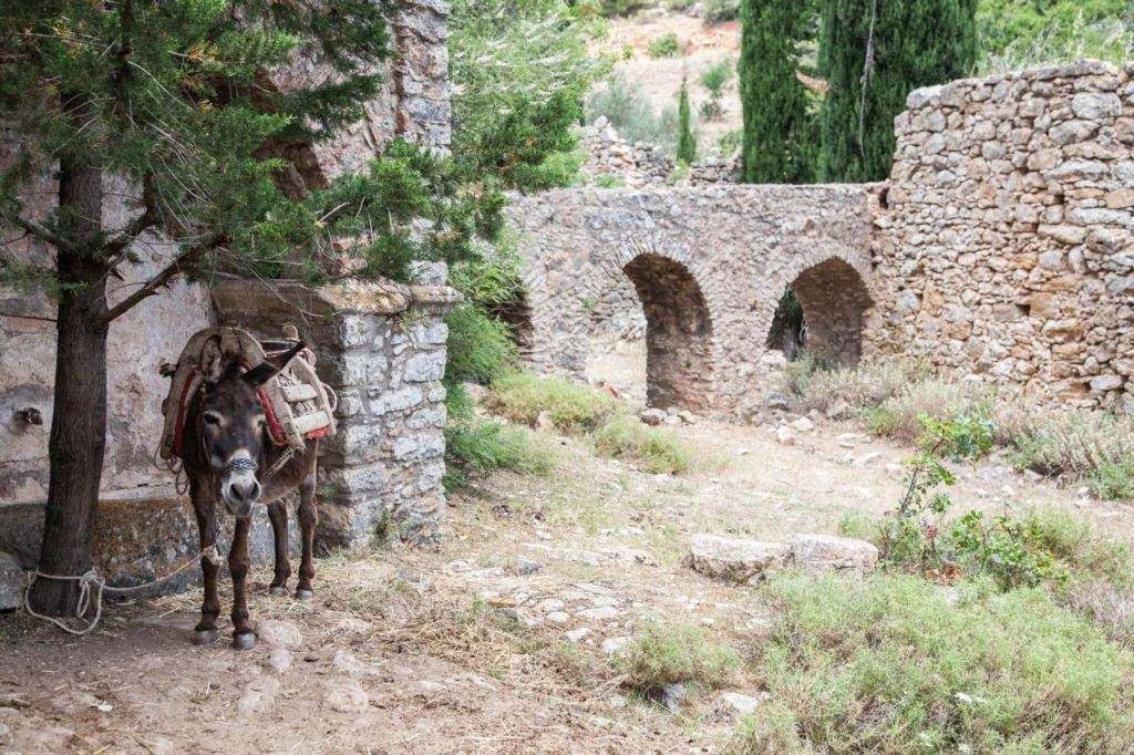 A saddled donkey stands in the shade on Chios.