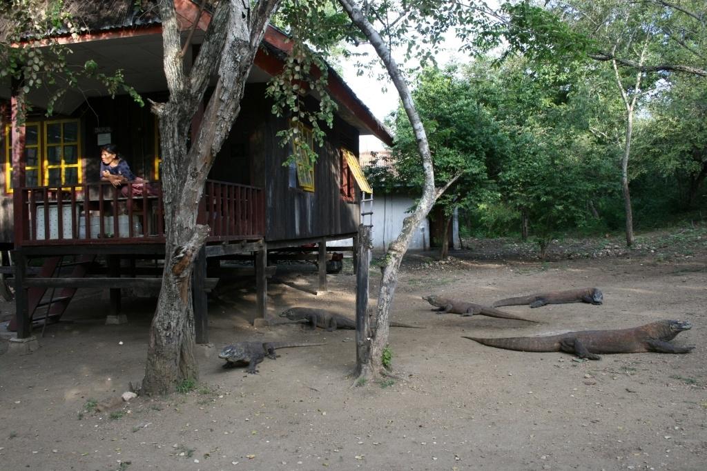komodoisland