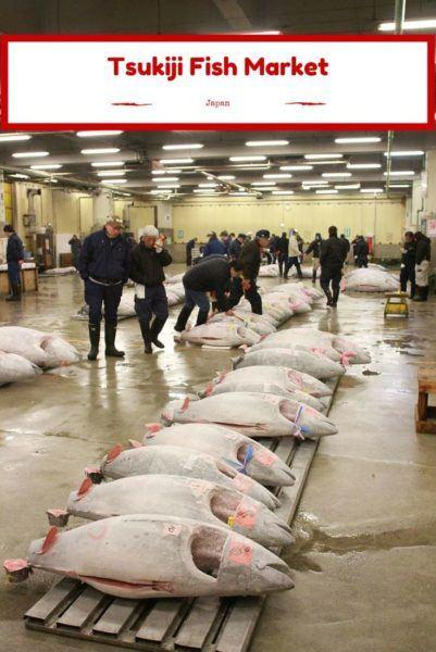 Tuna lined up for auction at Tsukiji Fish Market Tokyo Japan.