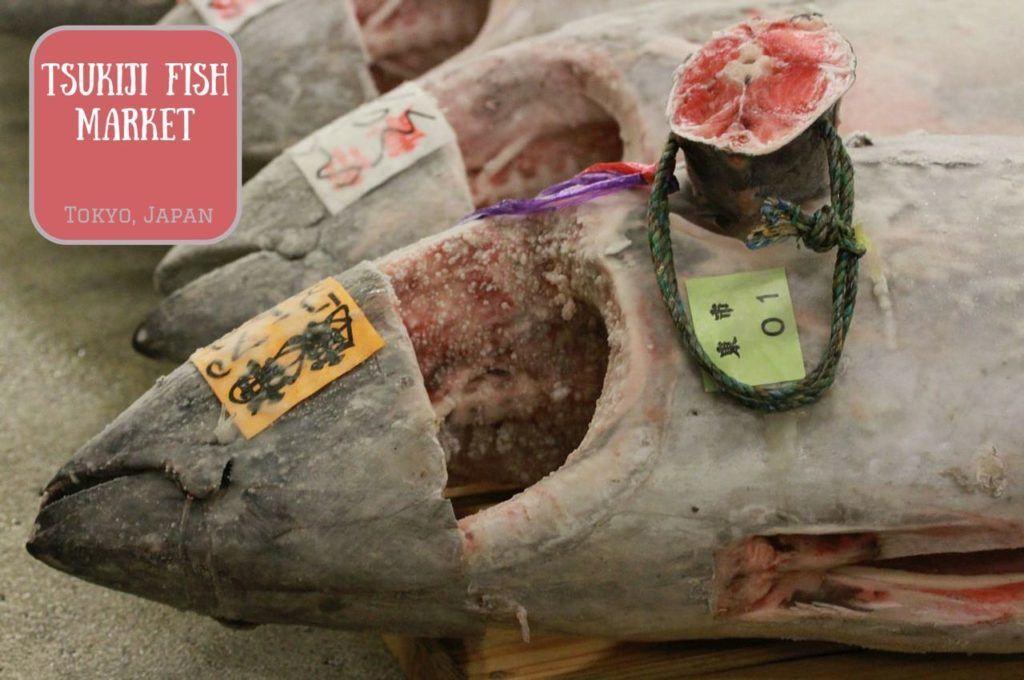 Tuna prepped and ready for the auction at Tsukiji Fish Market Tokyo Japan.
