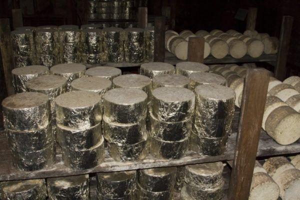 Wrapped Roquefort Cheese rolls in the dark basement.