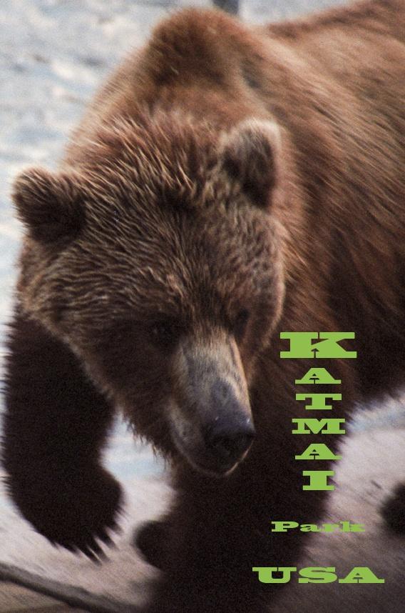 Katmai National Park, Alaska, USA.