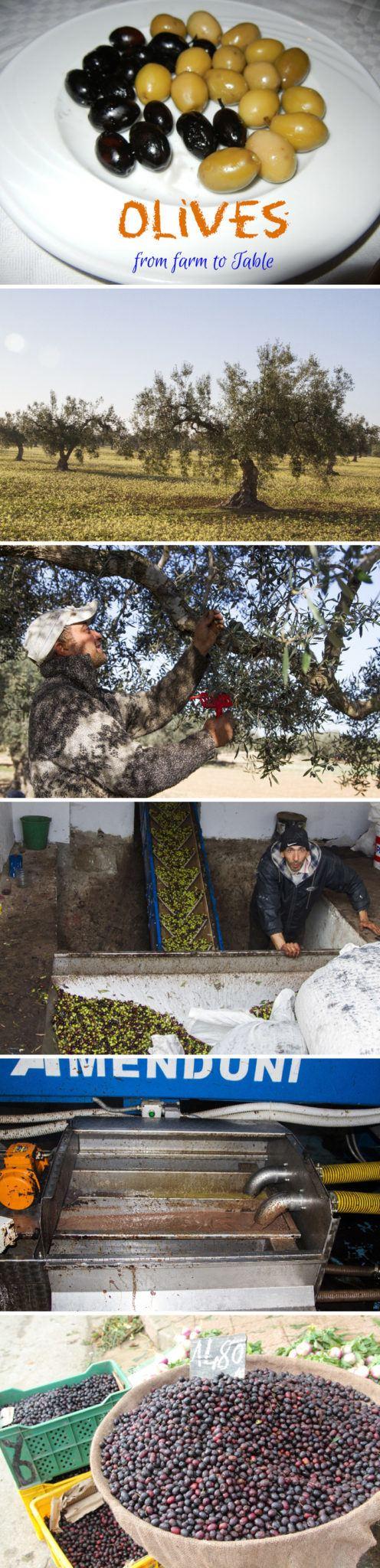Tunisia Olives