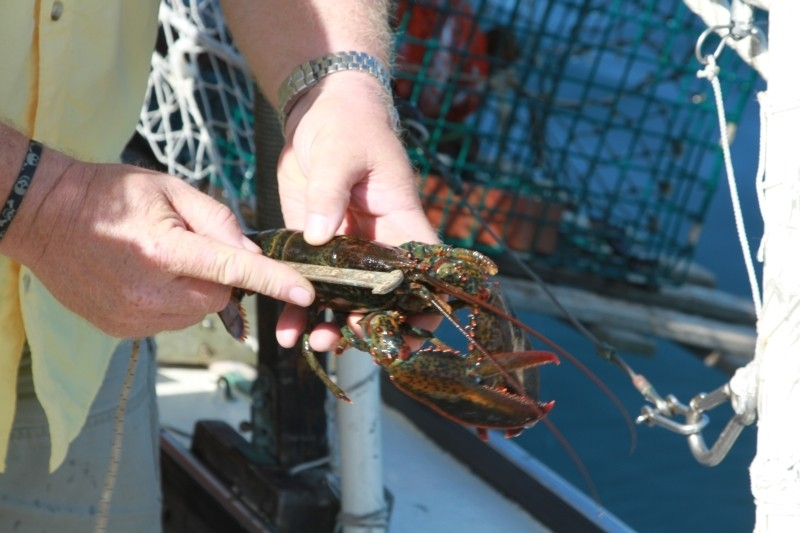 lobster tour USA