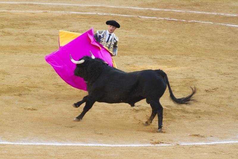 Bullfight Spain