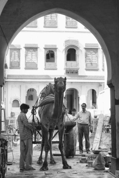 A camel transport being loaded up in India.
