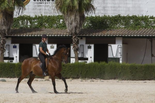 Jerez, Spain- training the horses is a never-ending job.