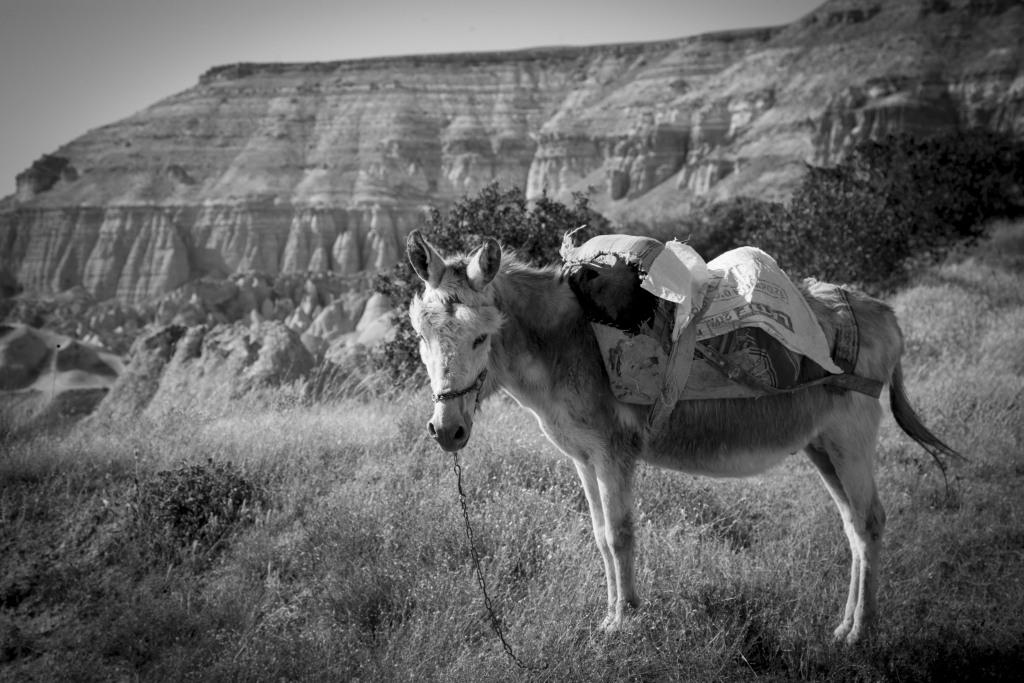 Donkey in Cappadocia