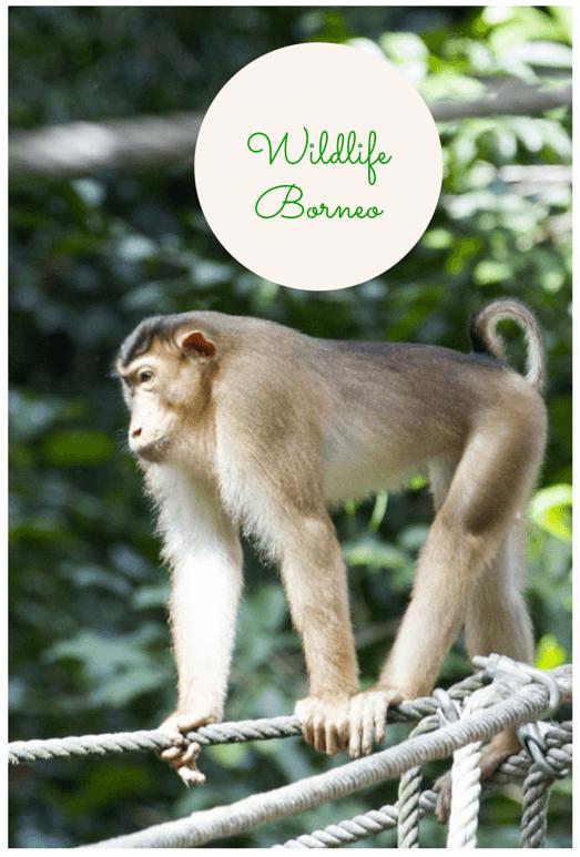 Wildlife Borneo