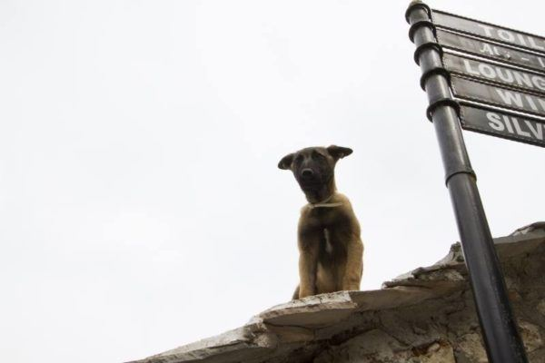 Dog on top of roof in Mostar.