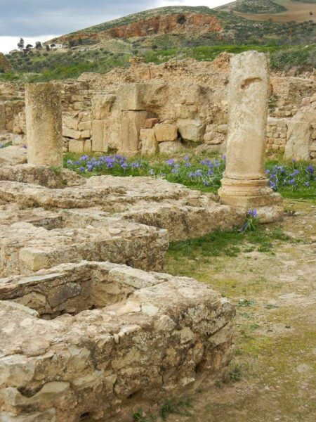 The beautiful purple flowers, showing off spring in Tunisia, made the site of Bulla Regia that much more fun to explore.