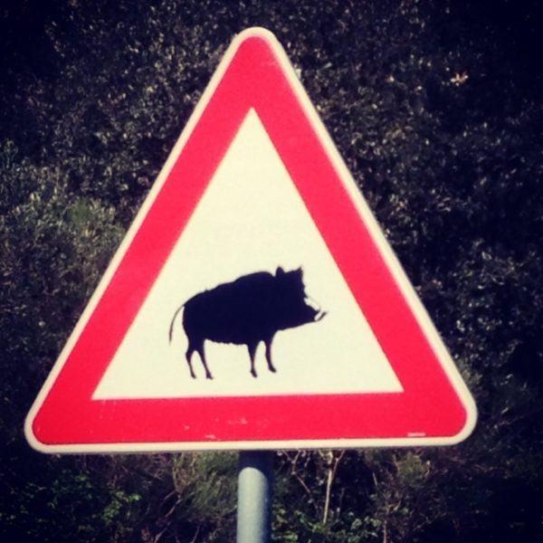 Wild boar crossing sign.