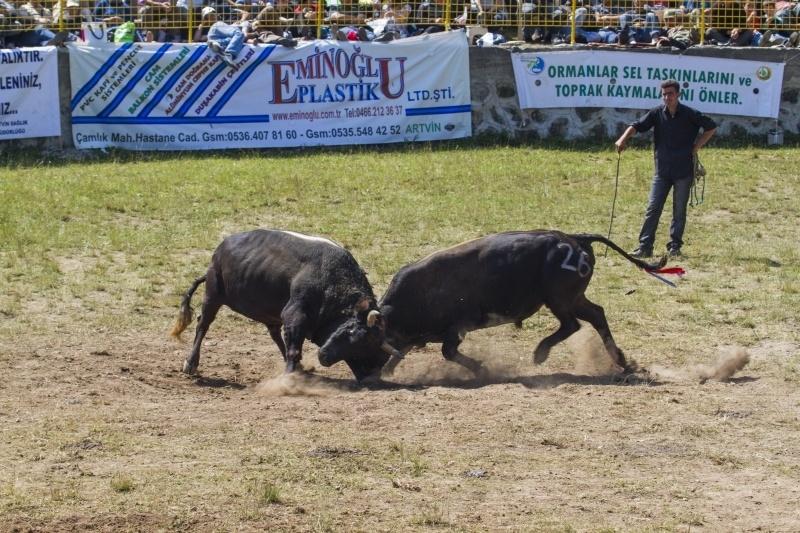 Bullfighting Oil Wrestling