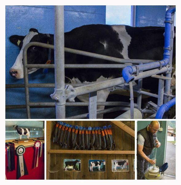 The dairy farm tour was very educational.