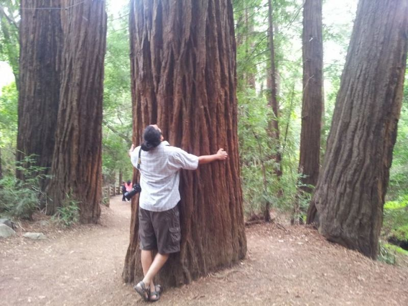 At the redwoods.