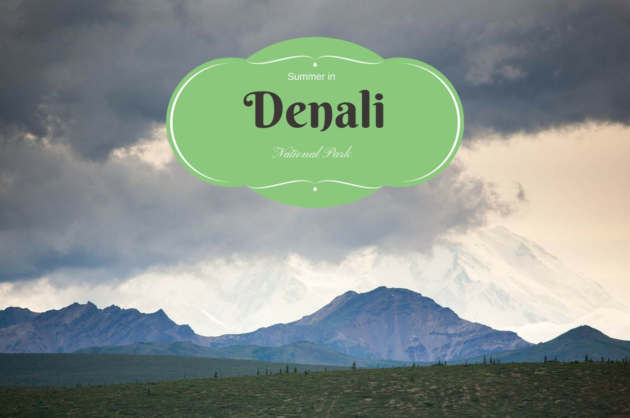 Summer in Denali National Park