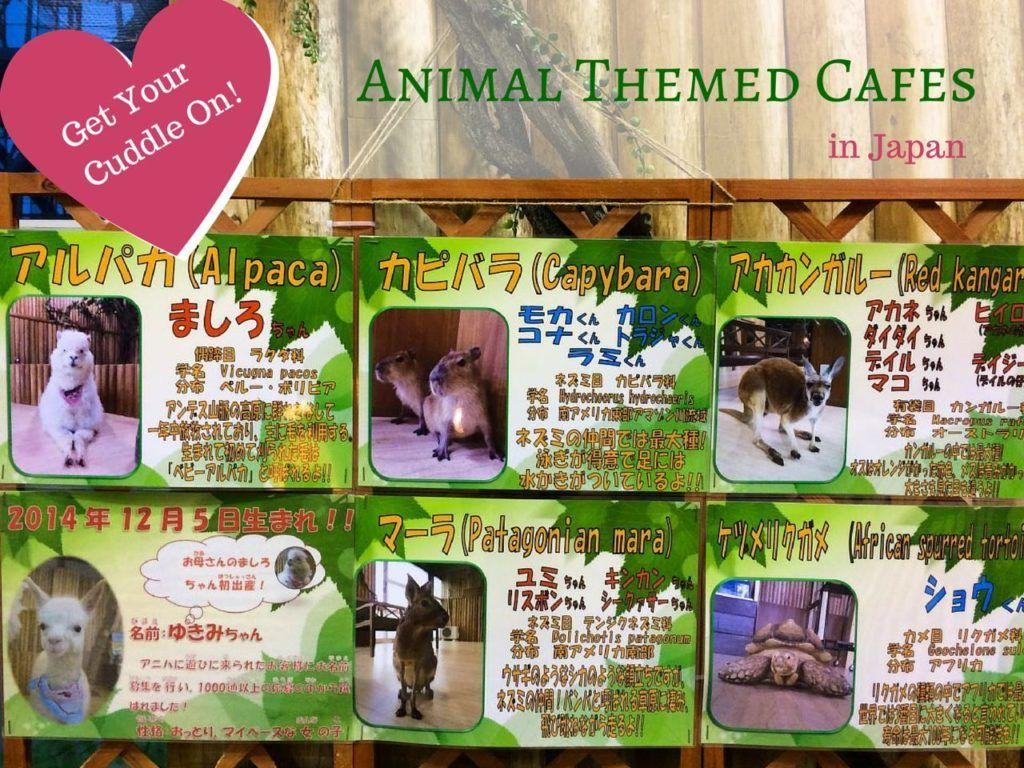 Animal Cafes in Japan.