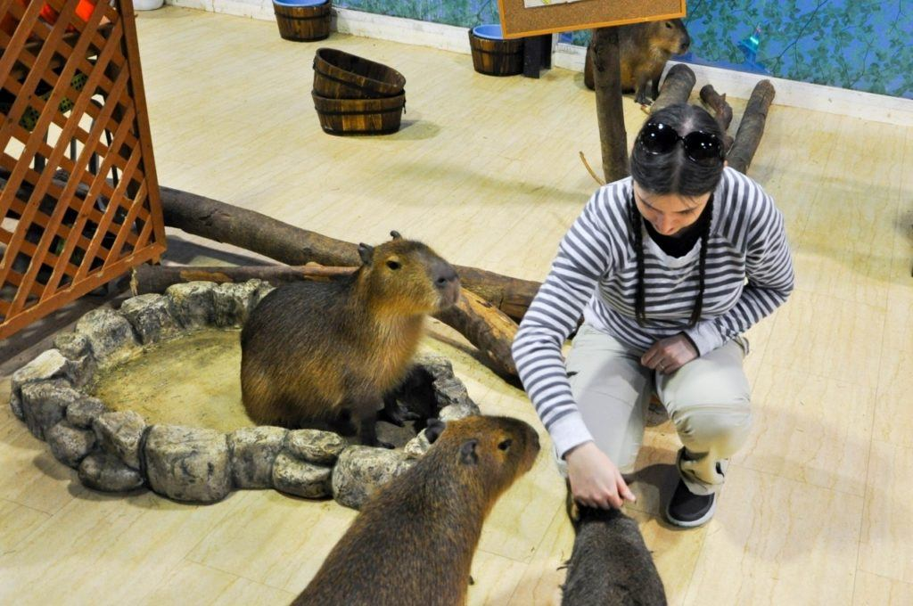 Devon petting three capybaras at the Osaka animal cafe.