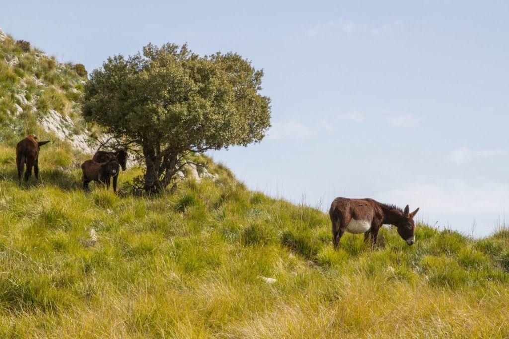 Donkeys on a hillside.