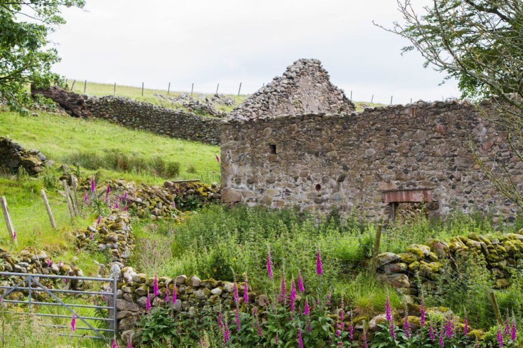 Old stone cottage ruins with wildflowers.