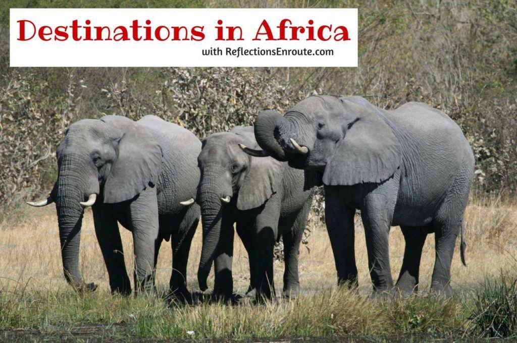 Elephants welcoming you to Africa.