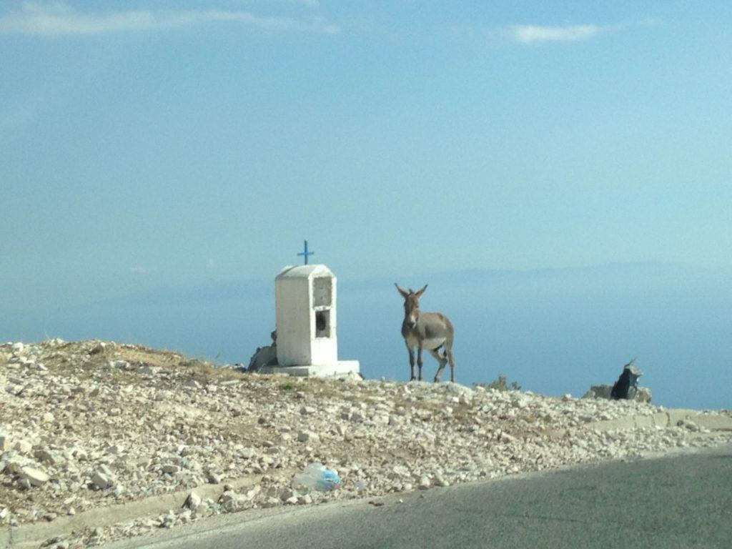 A mule standing next to a a small mountain top shrine in Albania.