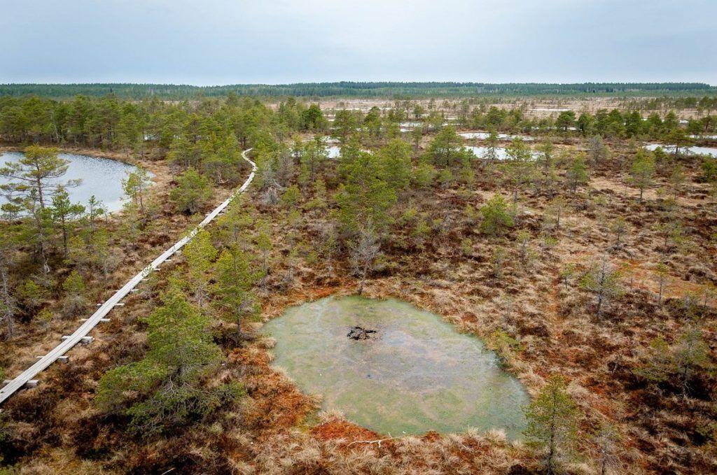 Wooden walkway through the Konnu Suursoo bog through marshy pools.