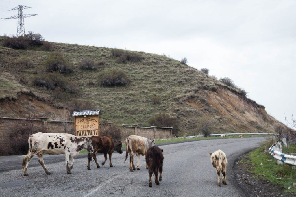Some road hazards include animals on the road at all times.