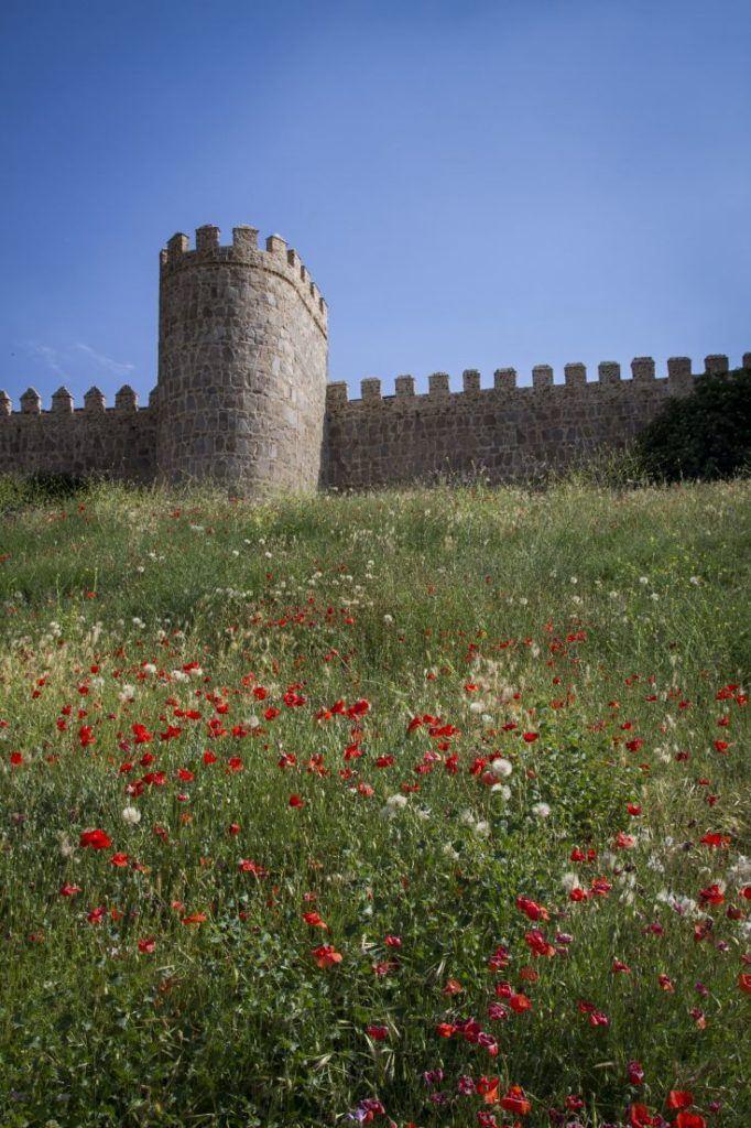 Red poppies carpet the hills outside Avila city walls.