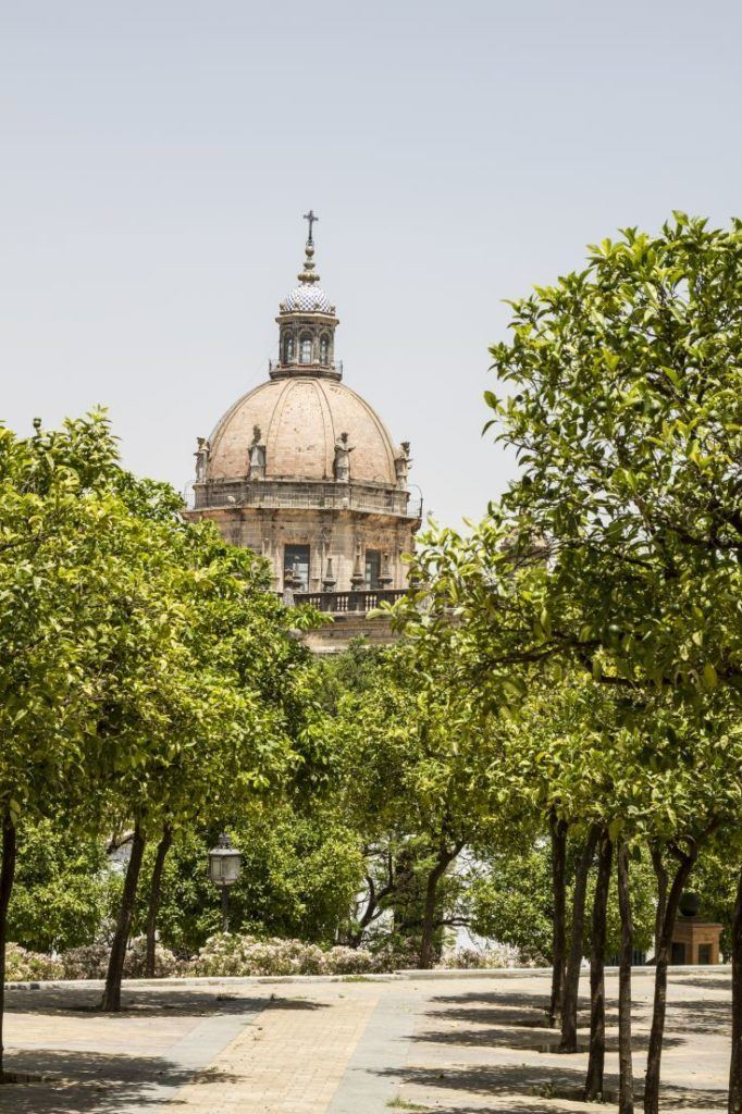 Shade trees provide some respite from the heat at the Jerez Cathedral.