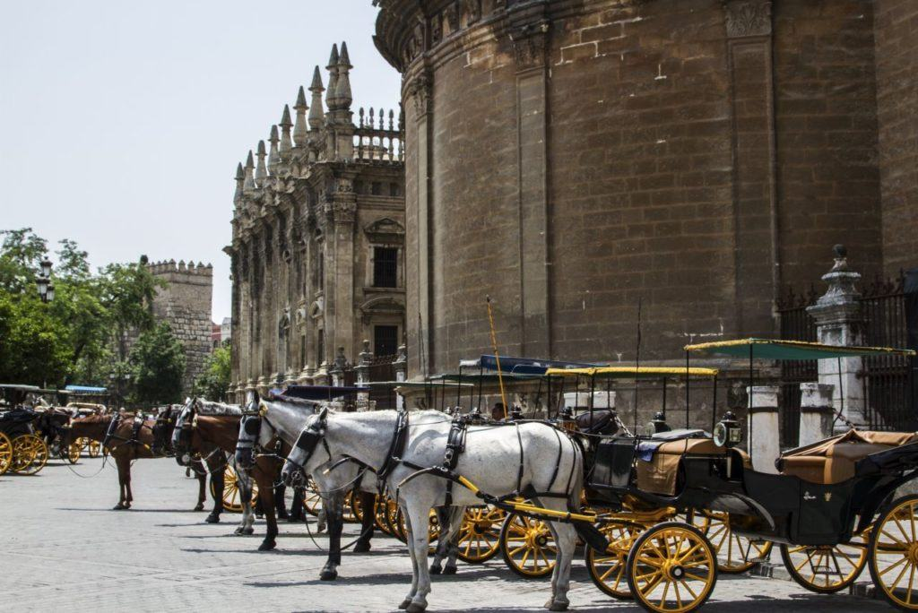 Horse drawn carriages line up in the sun in Seville's historic city center.
