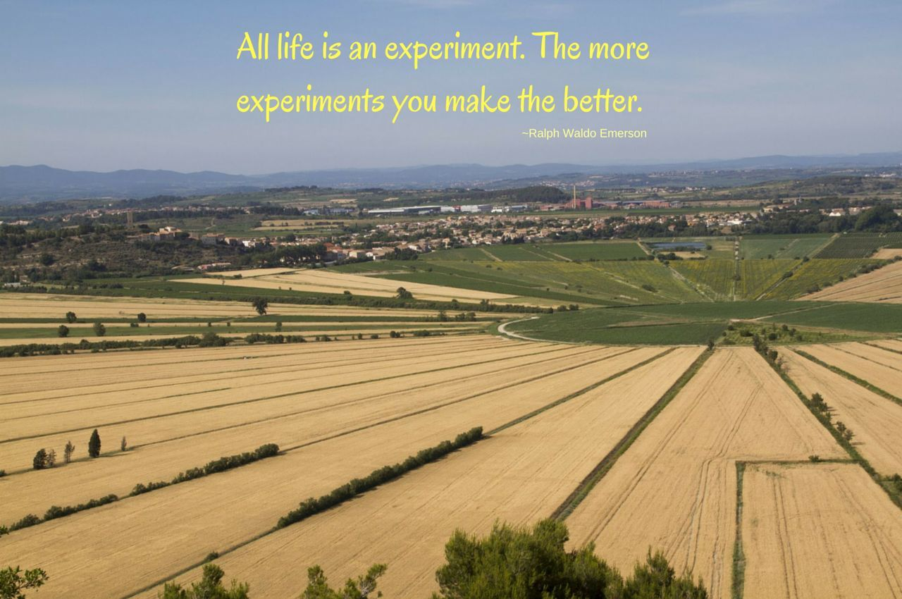 Life Experiment