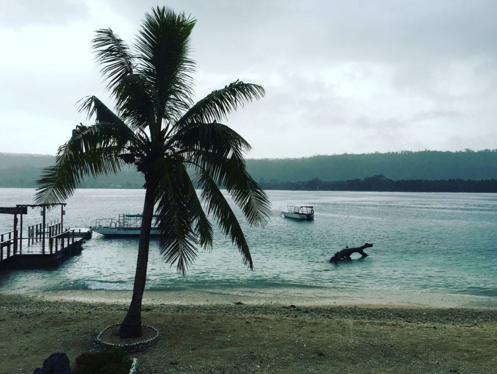 Palm tree on a beach with snorkel boats on the water behind it.