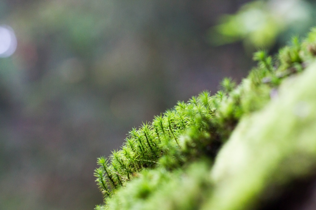 A closeup of the moss that grows on the huge rocks.