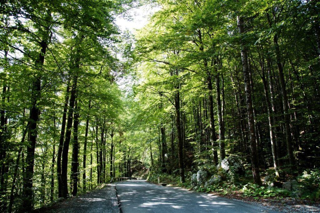 Green covered road near Lake Bohinj.