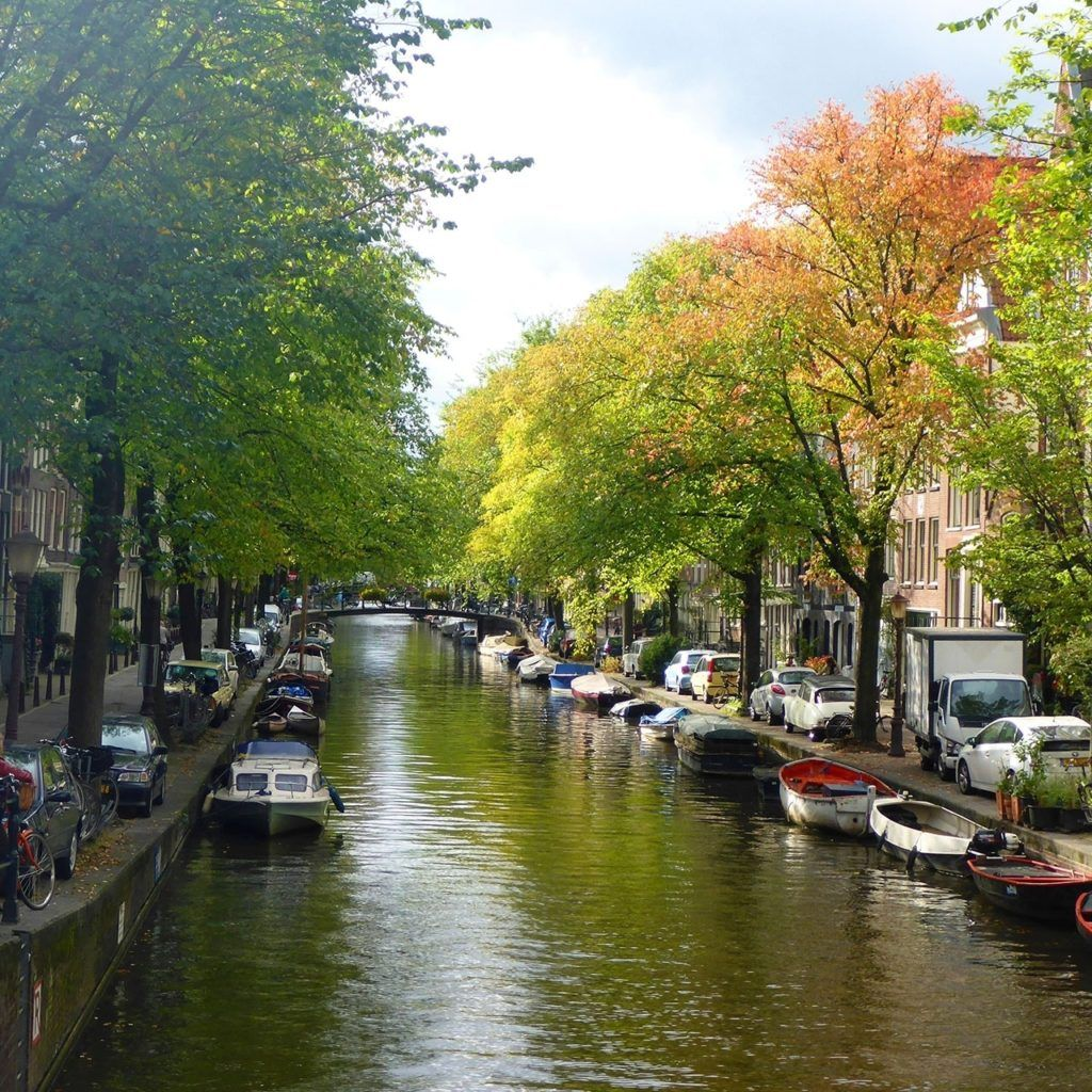 Fall leaves in Amsterdam.