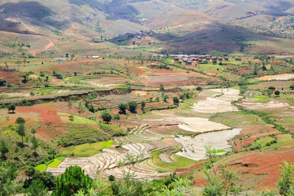 Rice fields in Madagascar.