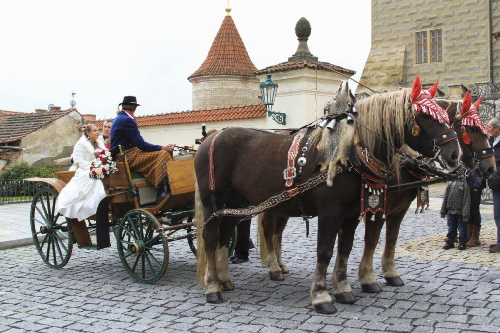 A wedding party in a horse-drawn cart in the Czech Republic.