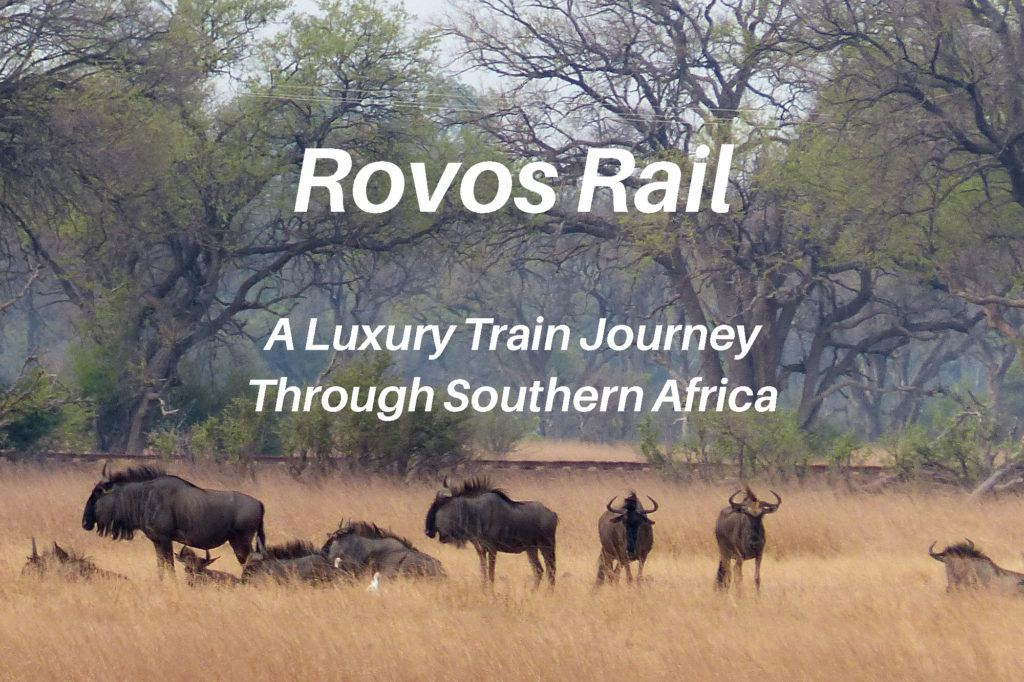 Wildebeests near the train in Zimbabwe, Rovos Rail review.