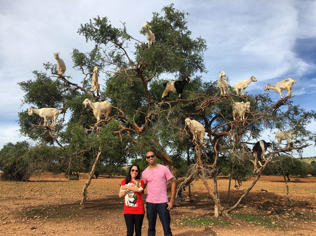 Goats in Trees?