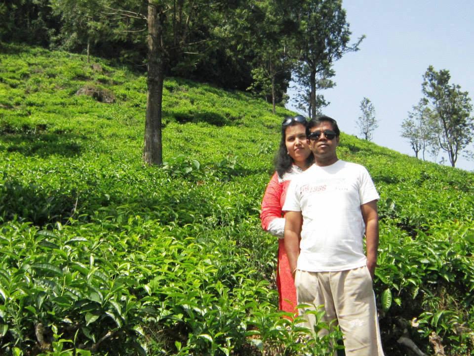 Tea plantations in India.