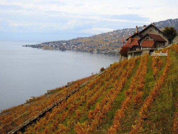 Lavaux Vineyards, after the leaves have changed color and all the grapes are picked.
