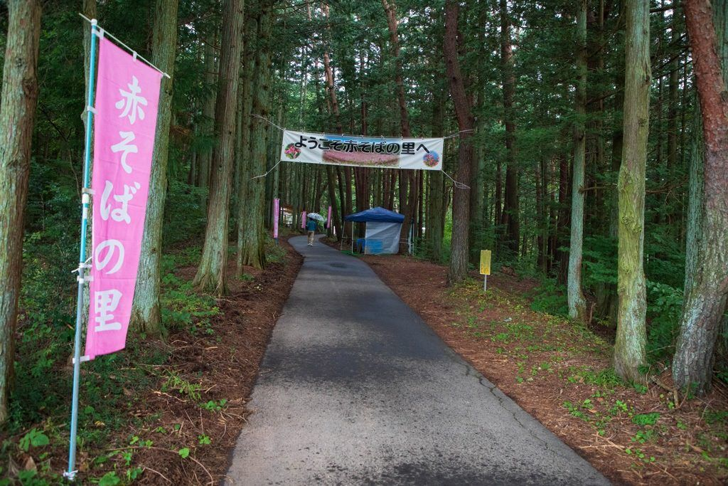 """These vibrant pink banners sporting the word """"soba"""" in hirogana led us all the way to the entry of the beautiful maroon fields of the red buckwheat flowers."""