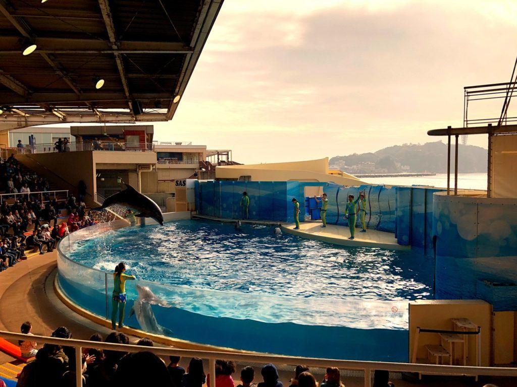 Enoshima Aquarium dolphin show.