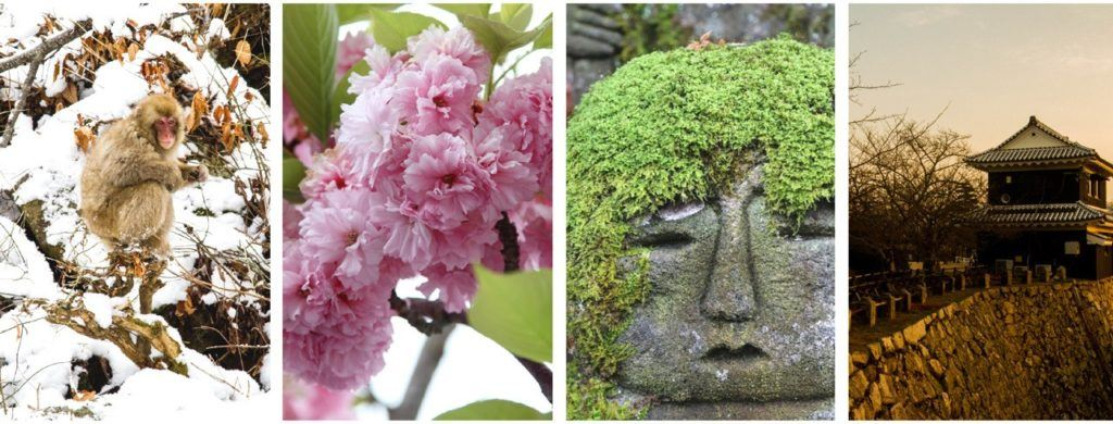 4 seasons on Japan, snow monkey in winter, cherry blossoms in spring, green mossy statue in summer, sunset of castle wall in fall.