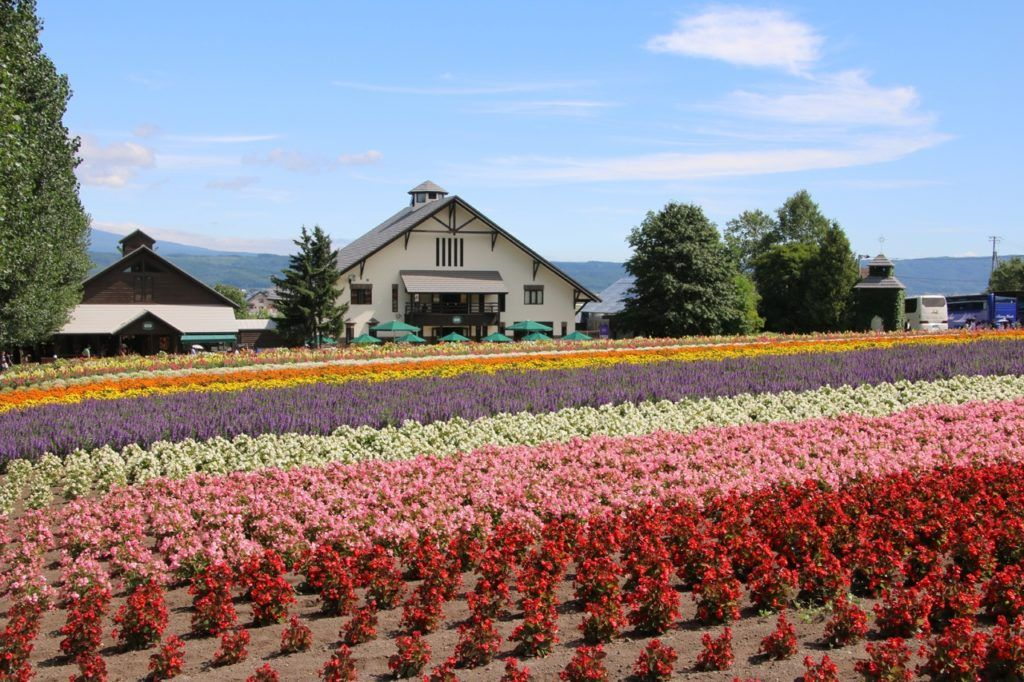 Summertime in Japan brings flowers and in Hokkaido that means lavender. Try the ice cream!
