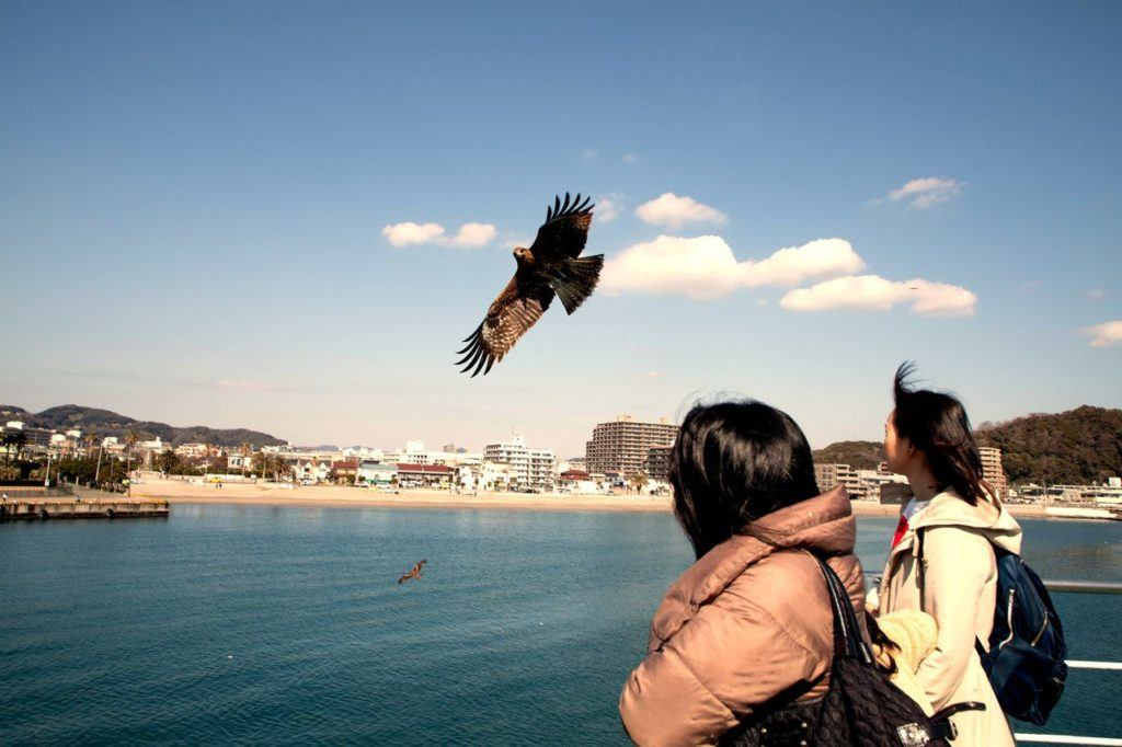 Sea eagles off the stern of the Kanaya Tokyo Bay ferry.